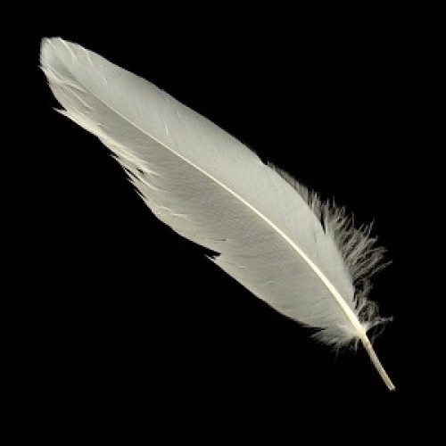 white-quill-feathers